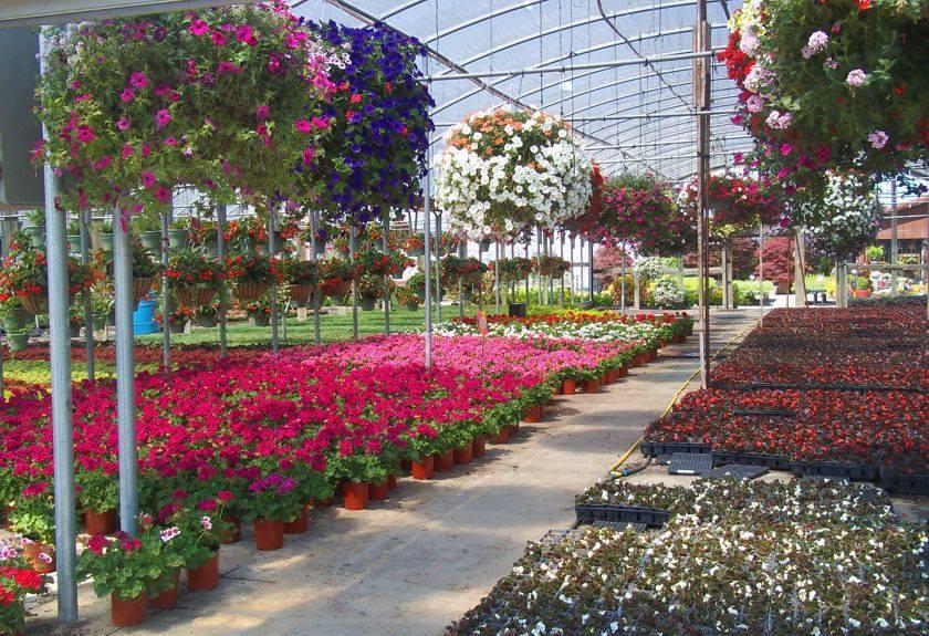 Plantas fuertes que pueden soportar condiciones difíciles