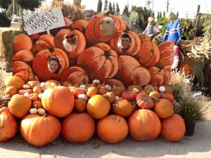 Pumpkins, gourds, corn stalks